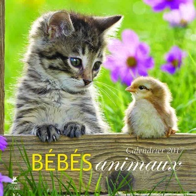 BEBES ANIMAUX, CALENDRIER 2017