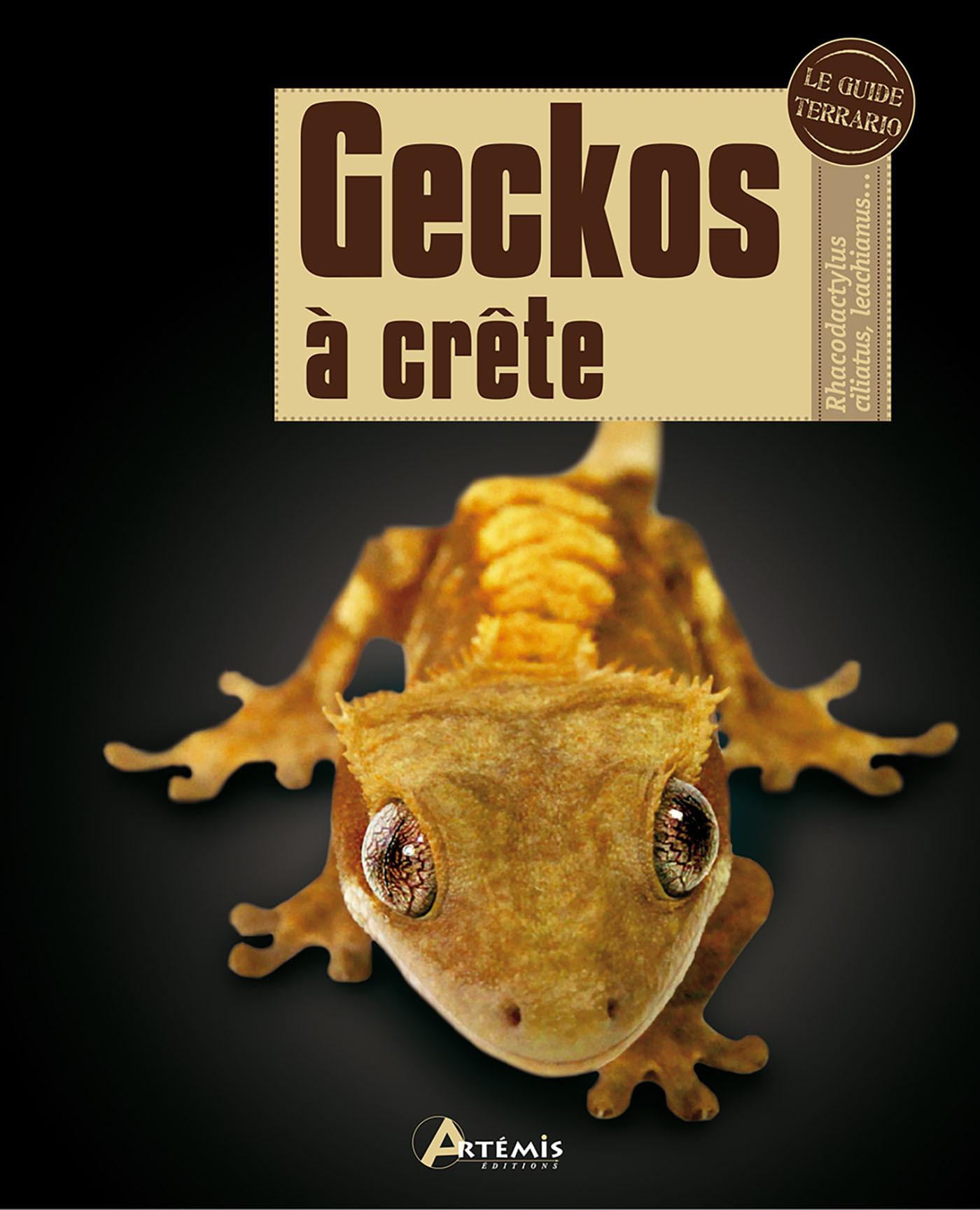 GECKOS A CRETE