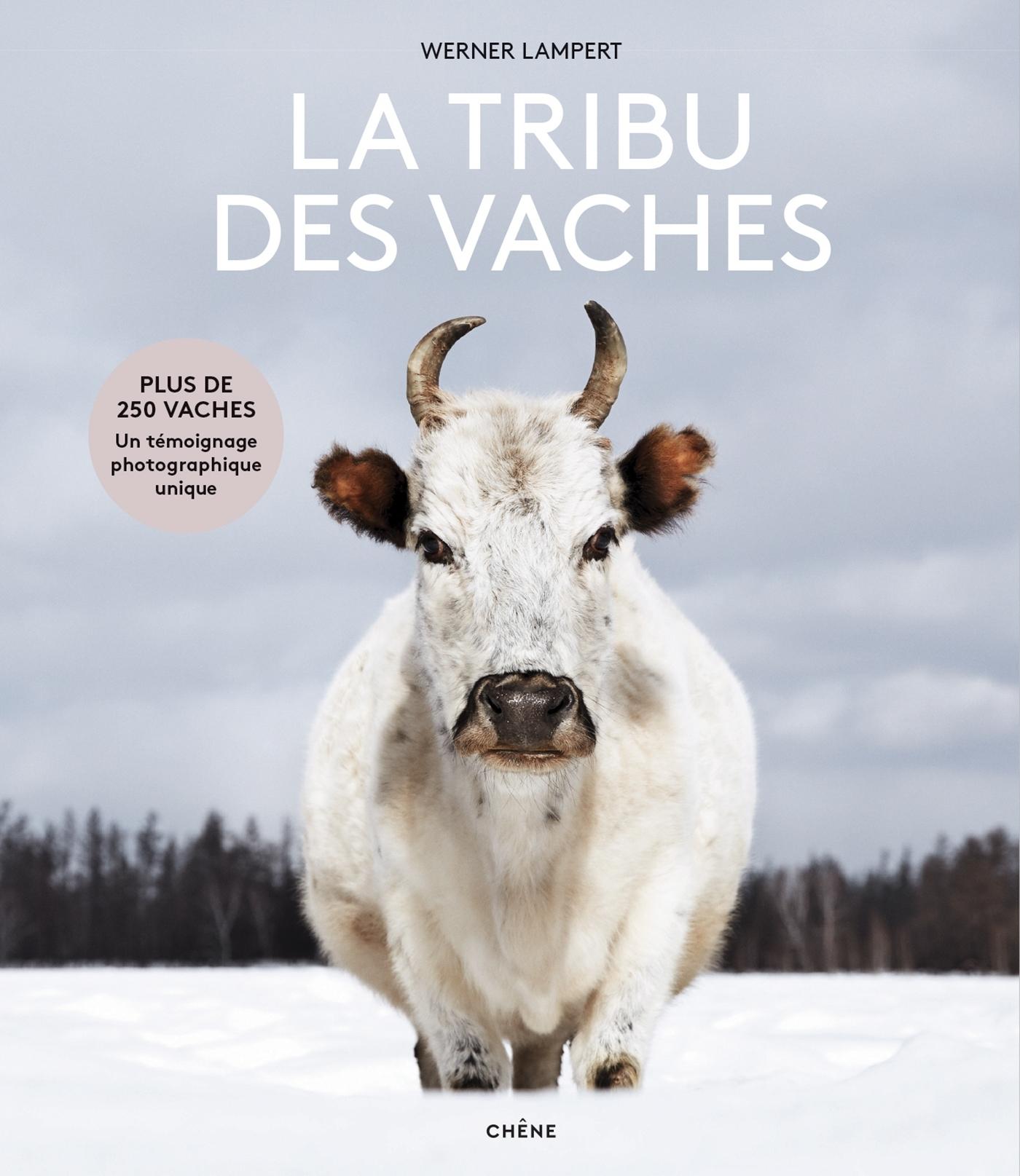 LA TRIBU DES VACHES - DES AUROCHS AUX VACHES SACREES