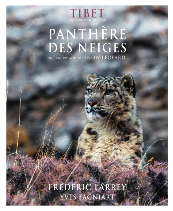 TIBET EN HARMONIE AVEC LA PANTHERE DES NEIGES / IN HARMONY WITH THE SNOW LEOPARD