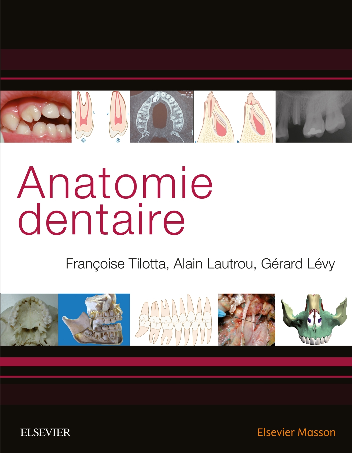 ANATOMIE DENTAIRE