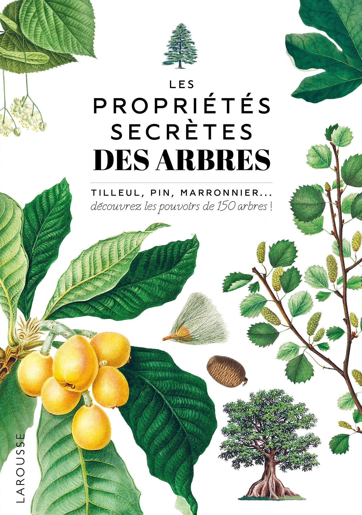LES PROPRIETES SECRETES DES ARBRES