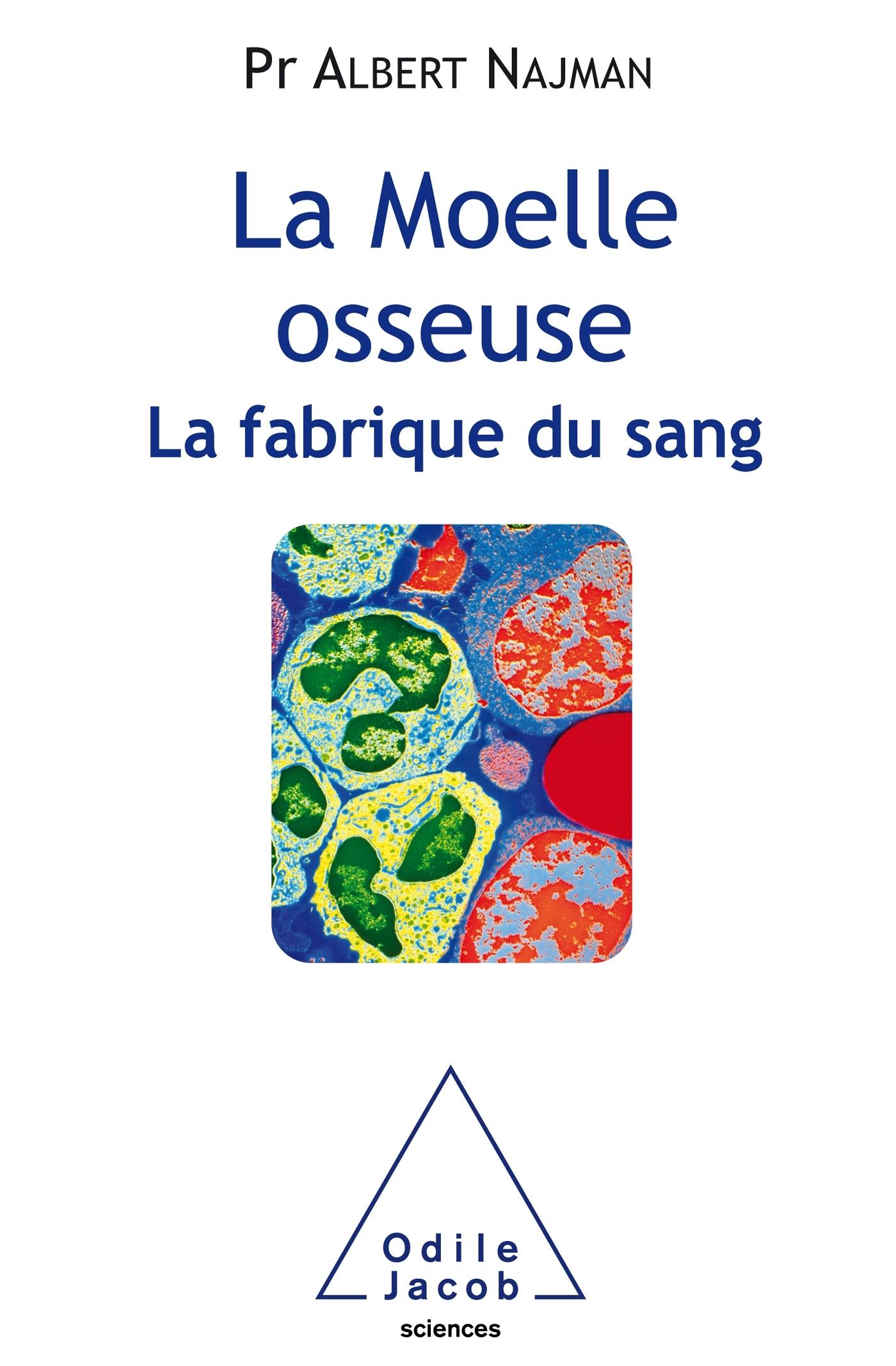 LA MOELLE OSSEUSE, LA FABRIQUE DU SANG