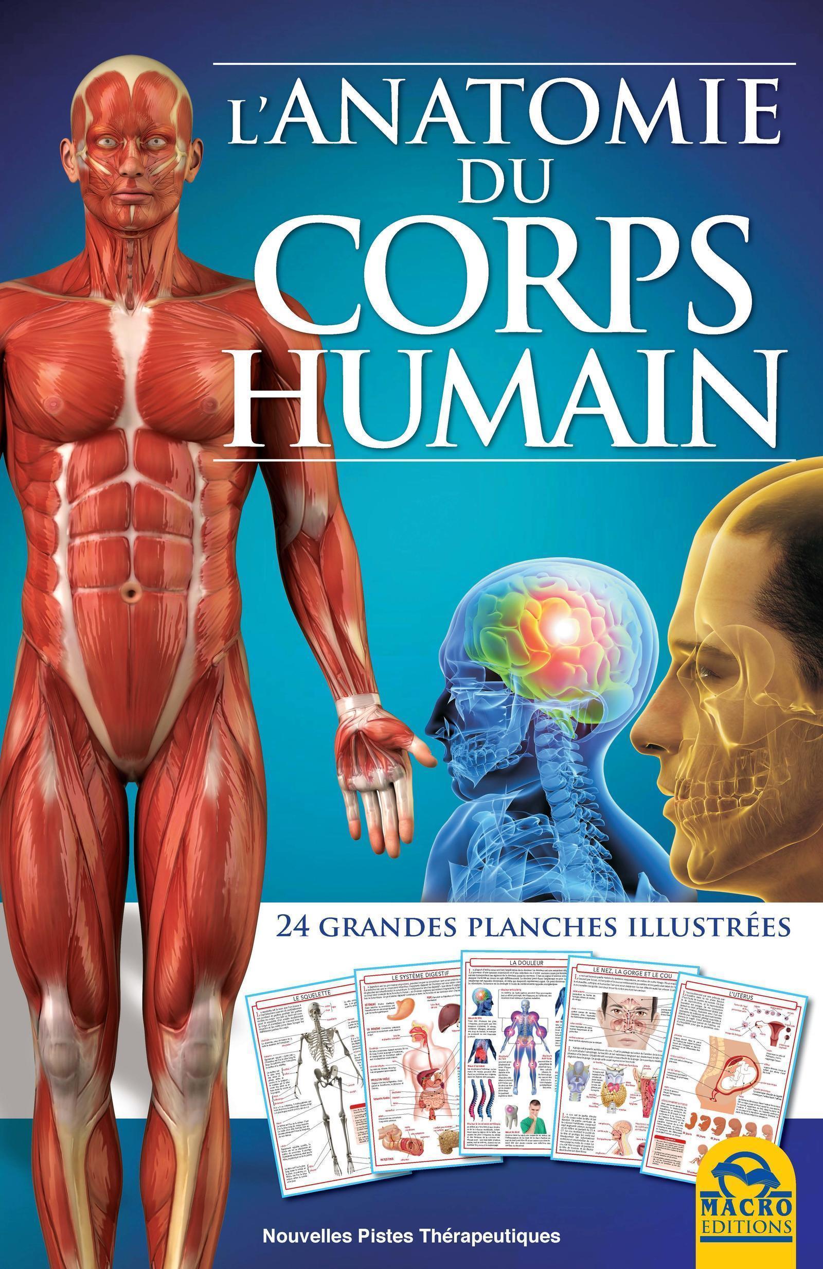 L ANATOMIE DU CORPS HUMAIN  24 GRANDES PLANCHES ILLUSTREES - 24 GRANDES PLANCHES ILLUSTREES.